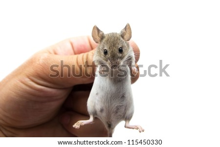 mouse in hand on a white background - stock photo