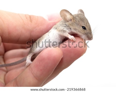 Mouse in hand on white background - stock photo