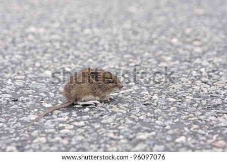 mouse is sitting on the street