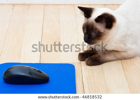 Mouse on a mousepad laying on the floor.  Cat sitting nearby and looking at the mouse.