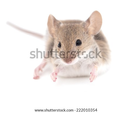 mouse on a white background. close-up - stock photo
