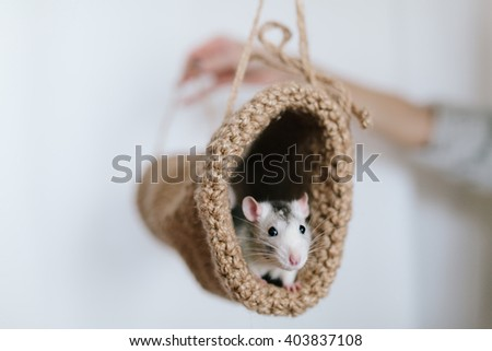 Mouse peeking out of the tunnel knitted on a white background - stock photo