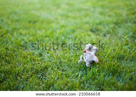 Mouse toy left on the mowed grass in the yard, with copyspace - stock photo