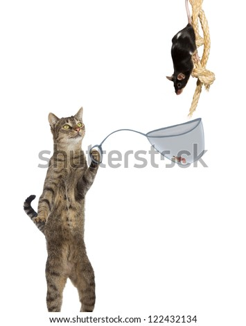 Mouser- Fun conceptual image of an intelligent cat ratcatcher holding a net with a tasty titbit under the nose of a mouse clinging to a rope isolated on white - stock photo