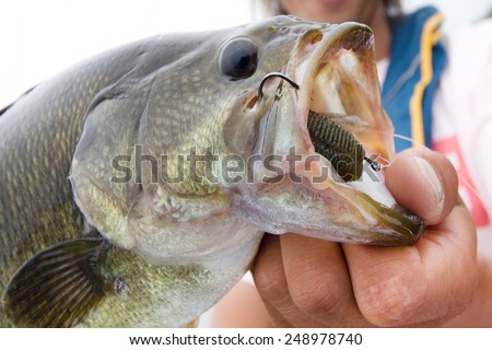 Mouth of the large-mouth bass - stock photo