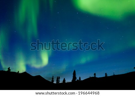 Moving bands of Aurora borealis or Polar lights dance on night sky over boreal forest taiga spruce trees of Yukon Territory, Canada - stock photo