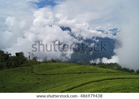 Moving clouds on a hill seen from a tea garden