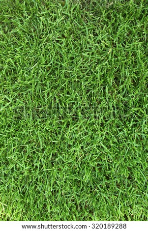 Mowed grass field background