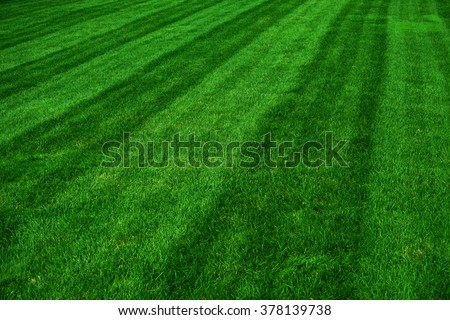 mowed green grass lawn