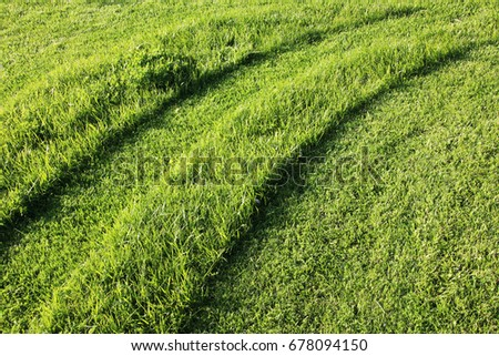 Mown and unmown lawn stripes in the summer garden
