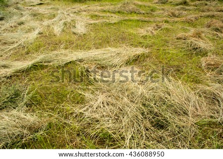 Mown hay scattered on the field - stock photo
