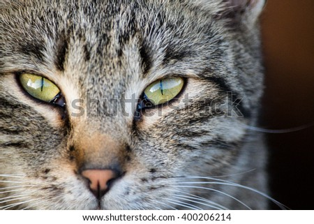 Ms. Cat - stock photo