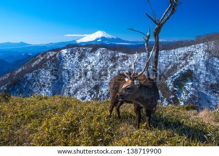 Mt.Fuji and deer - stock photo