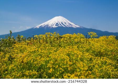 Mt Fuji at lake Kawaguchiko - stock photo