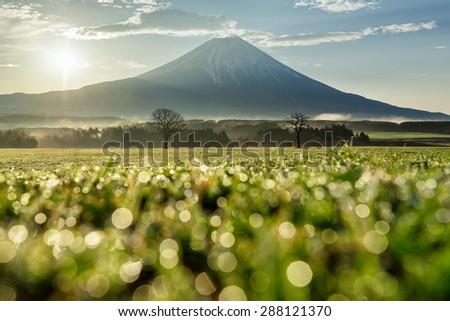 Mt.fuji Japan - stock photo