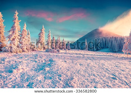 Mt. Homyak in the morning mist. Colorful winter sunrise in the Carpathian mountains. Instagram toning. - stock photo