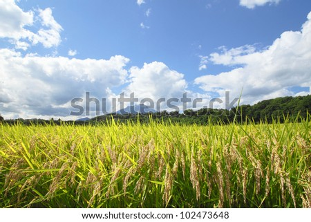 Mt.Iwate and Landscape of rice field with blue sky