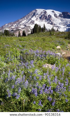 Mt. Rainier and Wildflowers in Bloom Cascade Mountain Range Summer Growth - stock photo