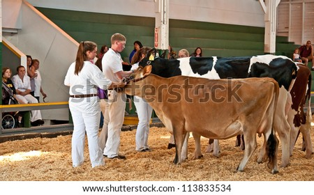 MT VERNON, WA - AUGUST 13: Unidentified teens in FFA are having their cows judged at the Skagit County Fair. The event was held August 13, 2009 in Mt Vernon, WA. - stock photo