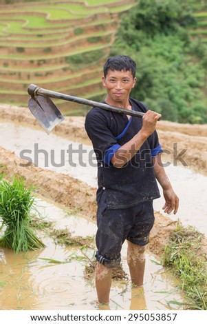 Mu Cang Chai , Vietnam- June 12; Man of Hmong working with young plant on field preparing transplant in water season on June 12,2015.Mu Cang Chai , Vietnam