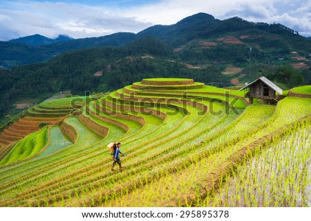 MU CANG CHAI, VIETNAM - JUNE 13: The unidentified farmers do agriculture job on their fields on June 13, 2015 in Mu Cang Chai, Yen Bai, Vietnam. This work is part of the Vietnam traditional farmers. - stock photo