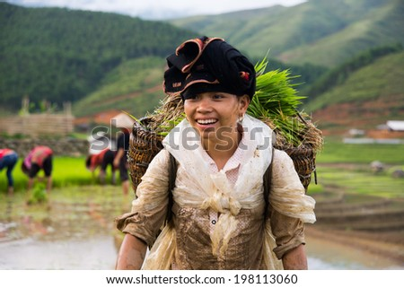 MUCANGCHAI, VIETNAM, JUNE 10: Unidentified Dao ethnic minority woman in  rice field on June 10, 2014 in Mucangchai, Vietnam. Dao is the one of ethnic groups in Vietnam.