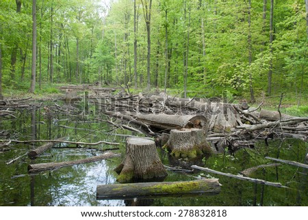 Mud in the spring forest, impassable road - stock photo