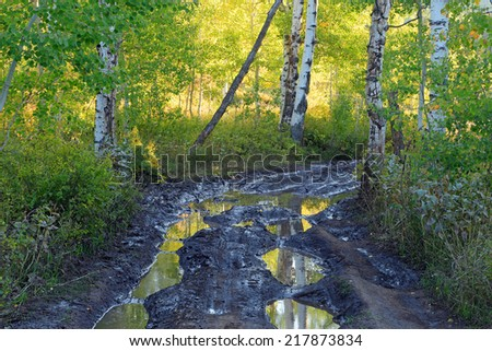 Mud puddle on a dirt road through an aspen forest, Utah, USA. - stock photo