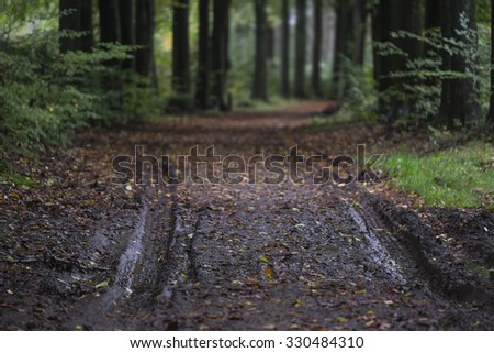 Muddy path in a forest with autumn leafs - stock photo
