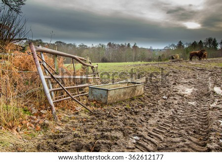 Muddy rutted field on a farm