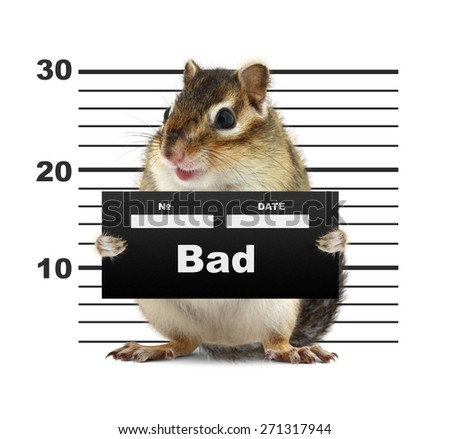 mugshot background with rodent, bad animal concept - stock photo