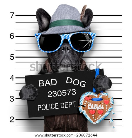 mugshot bavarian dog with a police banner - stock photo