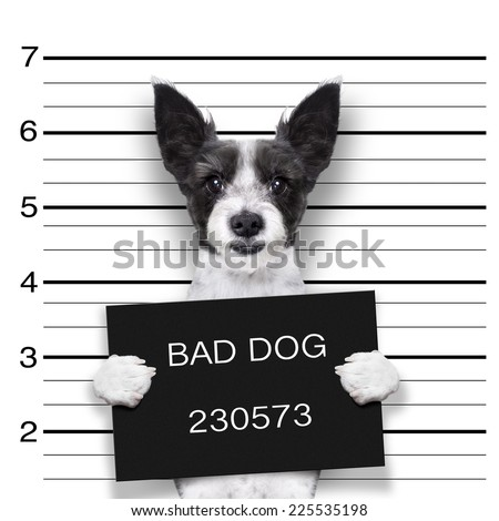 mugshot dog holding a black banner or placard - stock photo