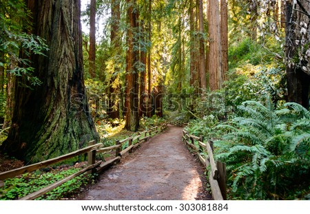Muir Woods National Monument - stock photo