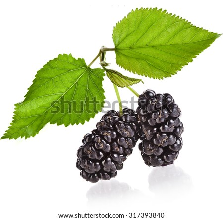 Mulberries with leaves Isolated on white background - stock photo