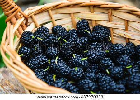 Mulberry basket. Blackberry basket. Ripe and fresh mulberries.