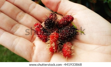 Mulberry in Hands