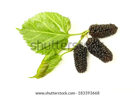 mulberry with leaves on a white background  - stock photo