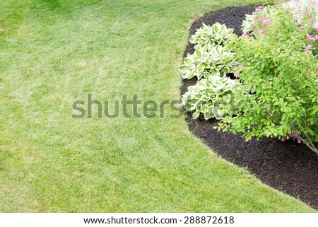 Mulched flowerbed with decorative hosta plants cultivated for their ornamental foliage in a neatly manicured green lawn in a formal landscaped garden viewed high angle - stock photo