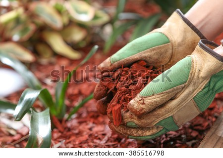 Mulching the garden with red cedar wood chip - stock photo