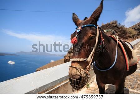 mule trail stock photos royaltyfree images amp vectors