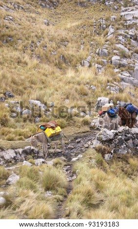Mule train, carrying loads in high mountains of 	Cordillera Huayhuash,	Andes, 	Peru, South America