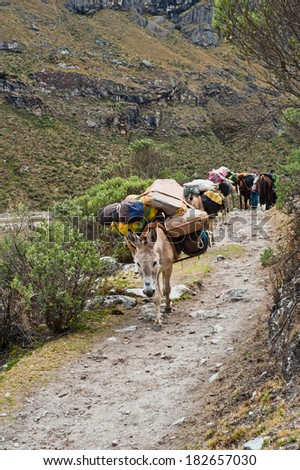 Mule train in the mountain of the peruvian andes - stock photo