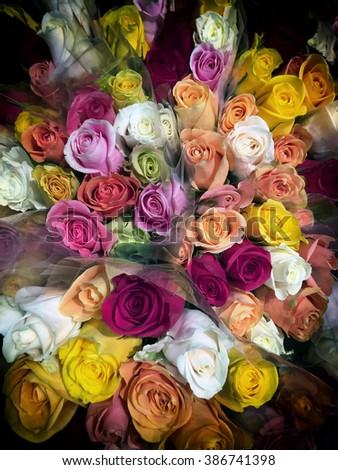 multi-color rose bud floral background - stock photo