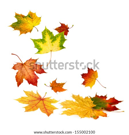 Multi-colored autumn leaves gently falling down, with white copy space - stock photo
