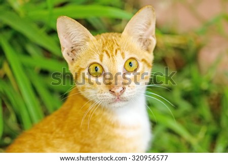 Multi-colored cat and yellow stripes with yellow eyes( Striped not purebred kitten. Small predator. Small cat) sit on floor , soft focus