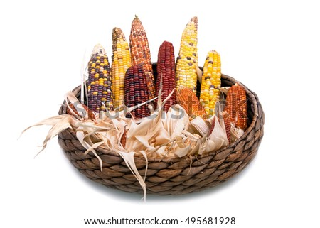 Multi-colored ears of dried corn in a wicker basket isolated on white background