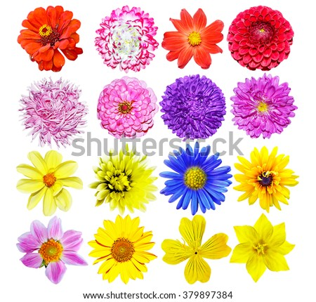Multi-colored flowers isolated on a white background