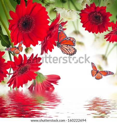 Multi-colored gerbera daisies and butterfly on a white background - stock photo