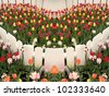 Multi-colored tulips surrounded by a white picket fence. - stock photo
